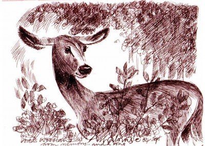 21  Somerset 05, DEER POISED FOR FLIGHT by Annalouise
