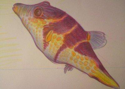 YEMANJA fish close up